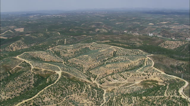 aerial ws olive groves on hills / martinchel, santarem, portugal - portugal stock videos & royalty-free footage