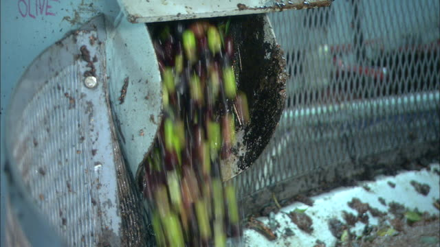 olive processing - olive oil stock videos and b-roll footage