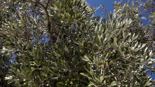 vidéos et rushes de olivier - sans mise au point and équilibre