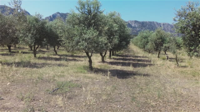olive trees and alpilles mountains - provence alpes cote d'azur stock videos & royalty-free footage