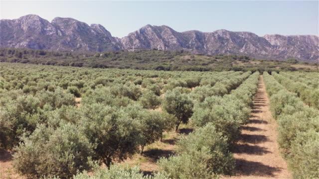 olive trees and alpilles mountains - オリーブ点の映像素材/bロール