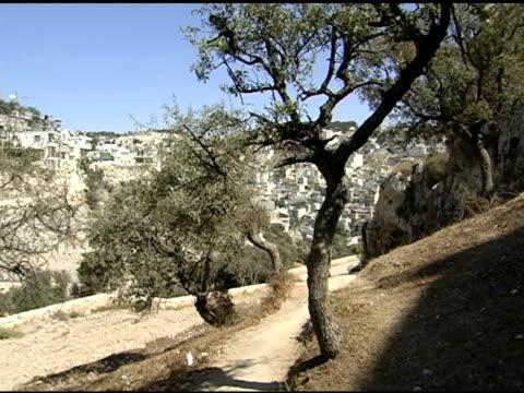 vidéos et rushes de des oliviers et voie piétonne en israël - jérusalem