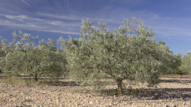 olive trees - provence alpes cote d'azur stock videos & royalty-free footage
