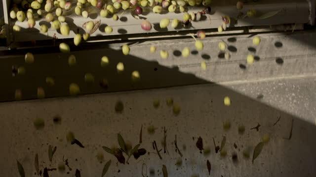 olives falling off conveyor belt in sun - gruppe von gegenständen stock-videos und b-roll-filmmaterial