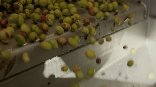 olives falling off conveyor belt - gruppe von gegenständen stock-videos und b-roll-filmmaterial