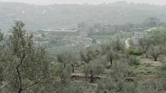 Olives groves in the Palestinian Territories