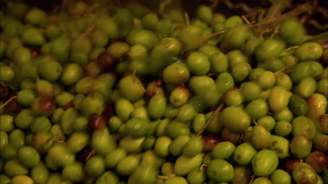 olives spill into a bin. - olive fruit stock videos and b-roll footage