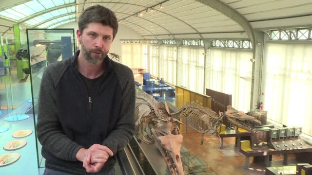 Olivier Lambert paleontologist at the Royal Institute of Natural Sciences of Belgium discusses the recent discovery in Peru of the well preserved...