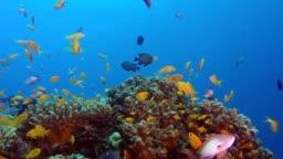 olorful Reef Underwater