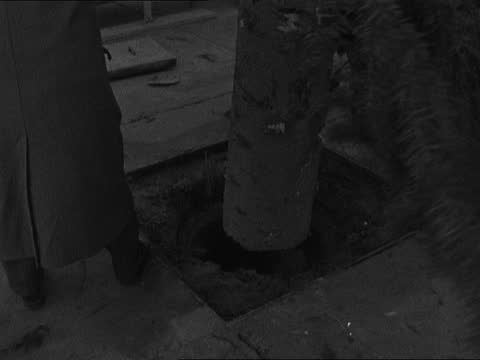 olso's christmas tree erected in trafalgar square; england: london: trafalgar square: ext various shots of olso's christmas tree erected in trafalgar... - itv evening bulletin stock videos & royalty-free footage