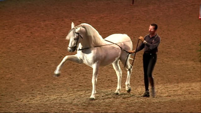 olympia horse show; england: london: olympia exhibition centre: int **music heard sot** white horse and trainer rehearsing for olympia horse show... - white点の映像素材/bロール