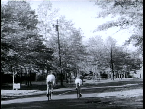olympic skater cornelia pooch harrington and her brother tommy ride bicycles down suburban streets and through a park - 1950 1959 stock videos & royalty-free footage