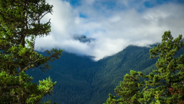 olympic slopes, washington - time lapse - olympic national park stock videos and b-roll footage