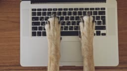 Сomical and silly playful video of dog paws typing and pressing buttons on laptop keyboard nervously and rapidly. Сoncept joke or freelance work in the office, pet life and routine workplace