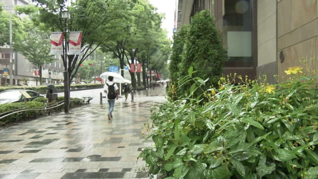 omotesando ave in rainy season, tokyo, japan - avenue stock videos & royalty-free footage