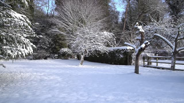 on a beautiful winter's day. - domestic garden stock videos & royalty-free footage