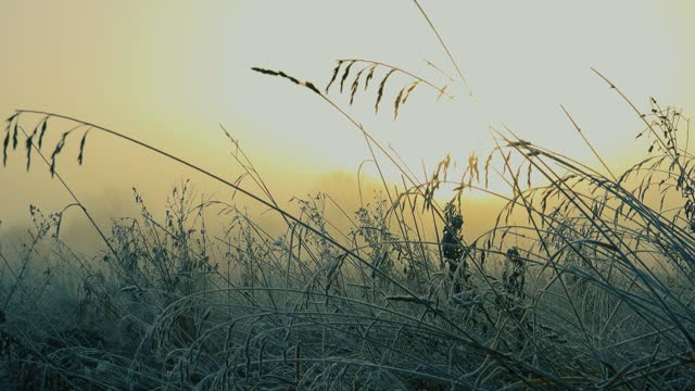 on a cold winter morning mist. - morning dew stock videos & royalty-free footage