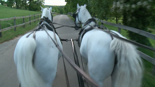 hd: on a horse carriage - two animals stock videos and b-roll footage