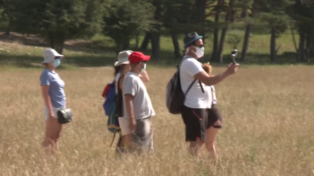 on a horse-drawn carriage safari, a group of tourists admire european bison and wild horses: in the alpes maritimes, the monts d'azur reserve... - eco tourism stock videos & royalty-free footage