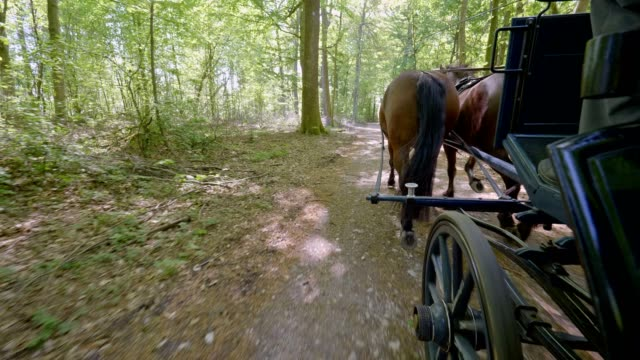 pov: on a horse-drawn carriage - carriage stock videos & royalty-free footage