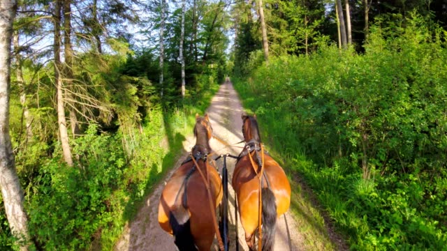 pov: on a horse-drawn carriage - horse stock videos & royalty-free footage