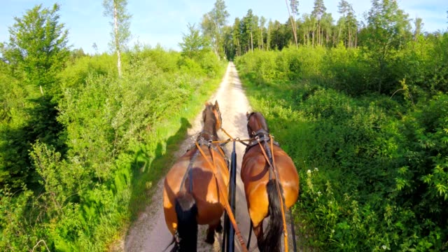 pov: on a horse-drawn carriage - cocchio video stock e b–roll