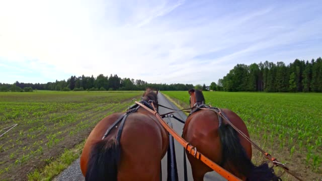 pov: on a horse-drawn carriage - horsedrawn stock videos & royalty-free footage