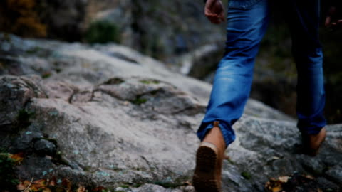 on a walk. hiker walking in a forest. - hiking stock videos & royalty-free footage