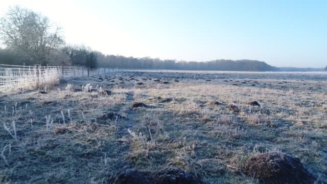on a winter day in east anglia. starts with top shot of single molehill then tracking shots over dozens of molehills. in field of sugar beet. - east anglia stock-videos und b-roll-filmmaterial