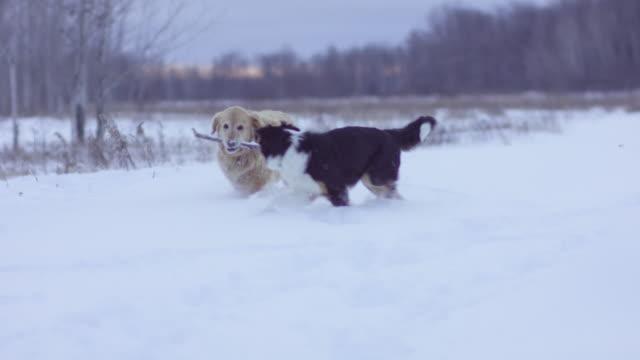On a Winter Walk