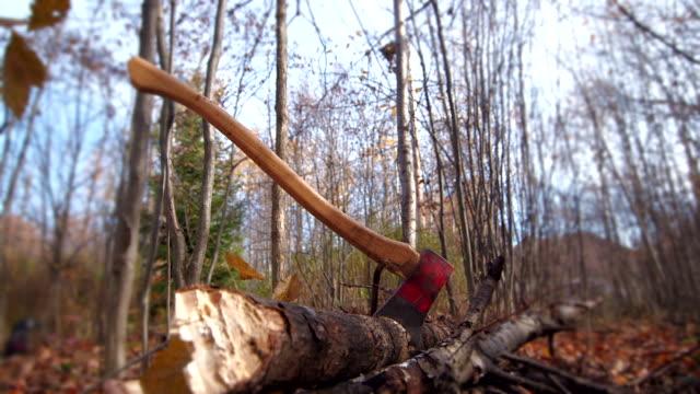 DOLLY IN on axe in dead tree