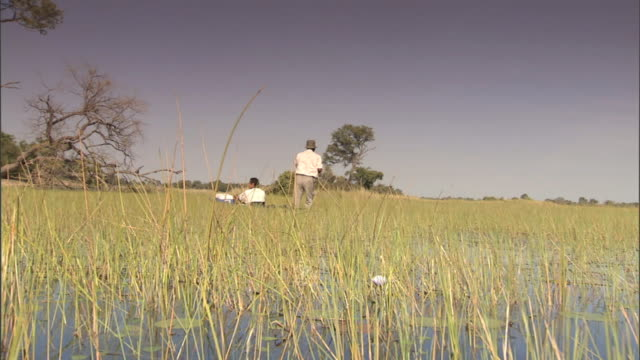 vídeos y material grabado en eventos de stock de floating along on swamp, second canoe passing in front through frame, unidentifiable rower & passenger, blades of grass & aquatic plants around,... - delta de okavango