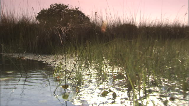 floating out on swamp, passing blades of grass, aquatic plants, lily pads, some ripples. wetland, shrub, marshland, marsh, morass, shallow water, no... - southern africa stock videos & royalty-free footage