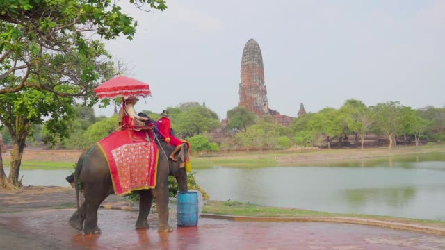 vidéos et rushes de on february 26, 2019 tourists with an elephant at wat chaiwatthanaram temple in ayutthaya historical park, a unesco world heritage site in thailand - touriste