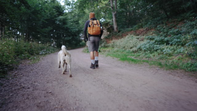 on hiking with his dog - zen like stock videos & royalty-free footage