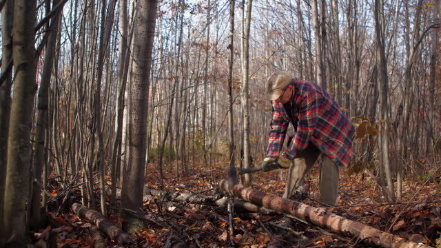 DOLLY IN on lumberjack chopping tree
