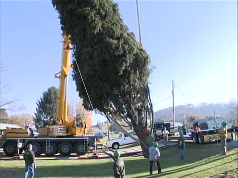 on nov. 9, pauze supervised two crane operators, three arborists and eight tag line guys to take down and load the 10-ton tree onto the... - rockefeller center christmas tree stock videos & royalty-free footage
