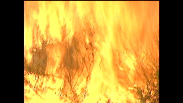 wpix on october 25 2003 in san diego california - cedar stock videos & royalty-free footage