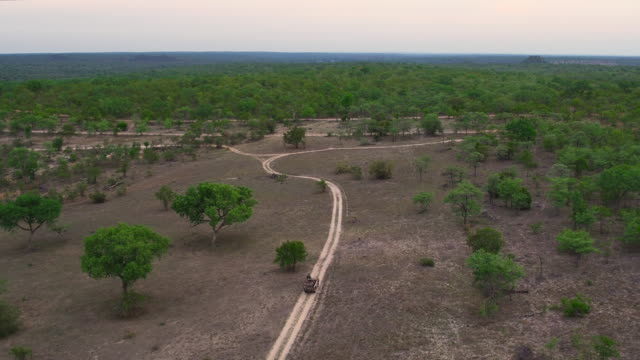 on the trail in the kruger park - wildlife reserve stock videos & royalty-free footage