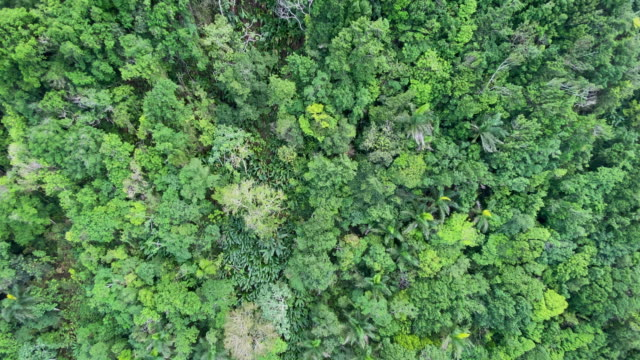 on the way up to isabel torres mountain peak, taken from the cable car, view of the tropical forest below. - atlantic ocean stock videos & royalty-free footage