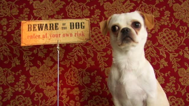 stockvideo's en b-roll-footage met on your guard . - vachtpatroon