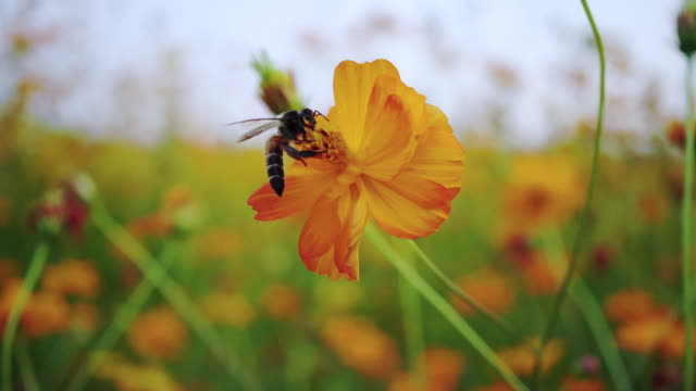 eine bee auf blume - wiese stock-videos und b-roll-filmmaterial