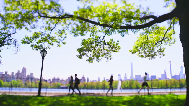 one big fresh green leaf tree stands beside the running track along the central park reservoir toward to the midtown manhattan skyscraper in central park at new york city ny usa on may 11 2019. - central park manhattan stock videos & royalty-free footage