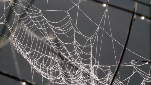 デューあしらったクモの巣のウォッシュ加工された信号が川の hd ビデオ - 動物の色点の映像素材/bロール