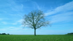 One leafless tree in green field on background of blue sky