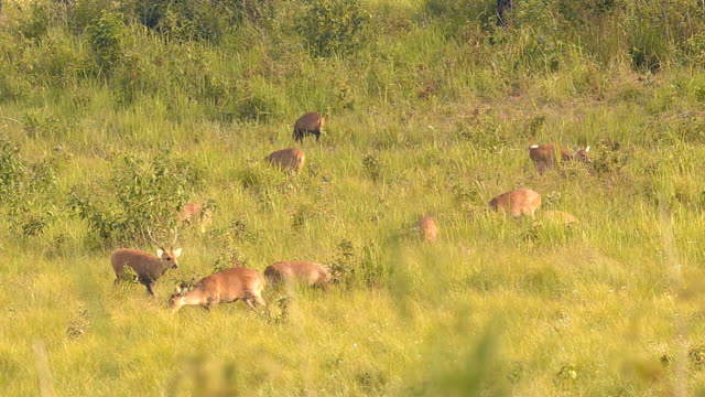 one male deer in family - deer family stock videos and b-roll footage