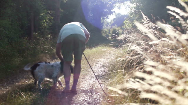 'one man and his dog' walking on a summer day - spaniel stock videos and b-roll footage