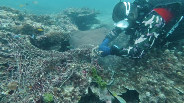 one marine reserve scuba diver removing underwater environmental pollution from coral reef - sea life park stock videos & royalty-free footage