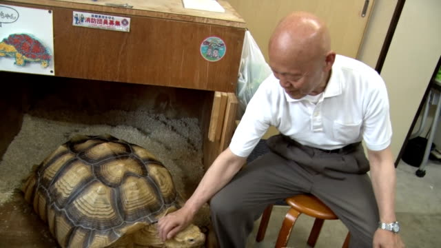 """one meter-long tortoise has become the quite hot topic recently around tsukishima, downtown of tokyo, popularly known as """"monja town"""" in chuo ward... - reptile stock-videos und b-roll-filmmaterial"""