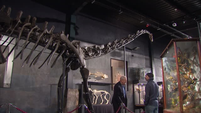 one of only six complete diplodocus skeletons in the world has just been sold at auction. sky news's joe tidy was at the auction house in west... - せり売り点の映像素材/bロール